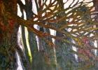 Lucius Pax : Medium Sized Painting 2005 3 : Torres Daxler : oil on linen : 150 x 100 cm : untitled